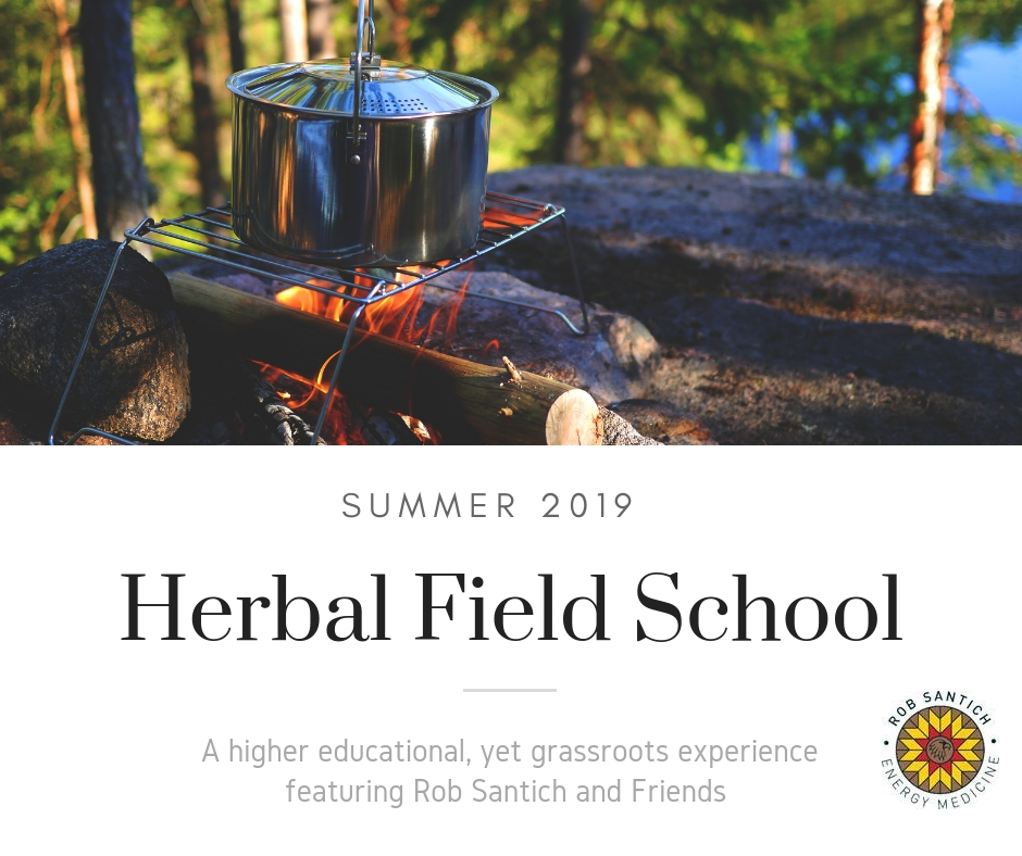 Bushlands Field School - Social Promo